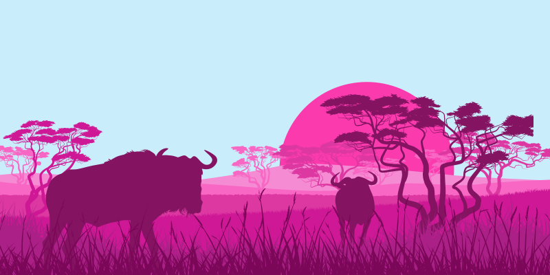 Two wildebeests relaxing by a sunset happy with their tool migration